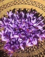 Saffron Petals